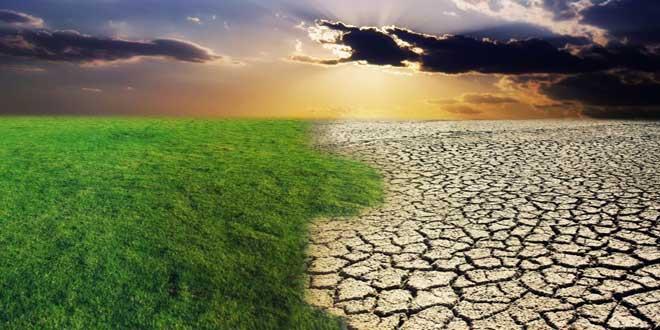 desert-grass